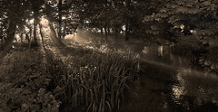 Wiltshire Dawn4 (Nick Holland) Tags: sunlight white black water scenery stream foliage sunbeam cotswold
