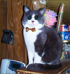 Gizmo, the Magnificent (Trpster*) Tags: blue cute smile sunglasses cat happy kitty bowtie shades gato bluecat stylish snazzy russianblue dapper grayandwhite greyandwhitecat kissablekat kissablecat imperfectrussianblue pixipimp dapperkitty trpster trpsterphoto nottobeusedwithoutpermission