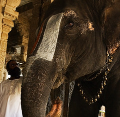 Priest and Elephant
