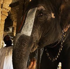 Priest and Elephant