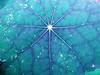 oceanic network