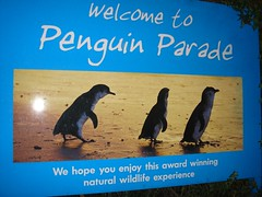 Penguin Parade!