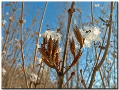 Seed Pods & Snow Crystals - by Roger Lynn