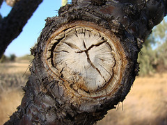 is time (Paco Espinoza | Photographer) Tags: old naturaleza abstract nature sonora mxico season francisco time pair watch sierra muerte reloj monte rolex choya espinas espinoza fotoarte 3ofakind acehigh flickrfriday cajeme 2pair impressedbeauty franciscoespinoza pacoespinoza visitingmexico pacoespinozacom