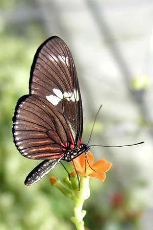 360127686 b008c3078e - Lovely Butterfly Photos