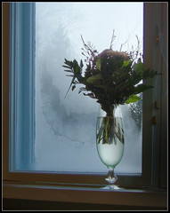 ... another saturday morning ([ Petri ]) Tags: morning winter light flower window frost fiatlux impressedbeauty laitmanintie