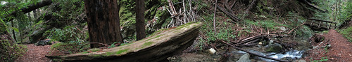 Big Sur trail panorama