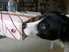 millie checks out mail II
