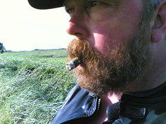 smoking a cigar (waderbear) Tags: beard bears cigar