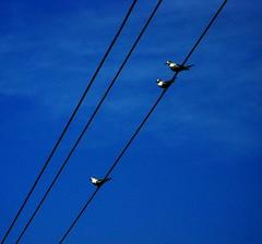 Threes (Raddie) Tags: sky bird kerala diagonal minimalistic backwaters