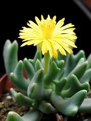Crabby's Flower