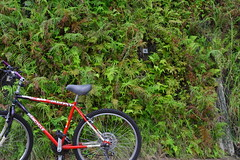 I need a break (* andrew) Tags: plant green slr bike bicycle digital canon hongkong eos 350d dslr  1740mm plovercovereservoir