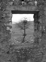 window around a tree (stefg74) Tags: bw tree window blackwhite free greece oldhouse steven stg gst rockwall lonelytree stefano stefanos freeuse  stggr1    top20gray justrss justrsscom wwwjustrsscom httpwwwjustrsscom stefg74