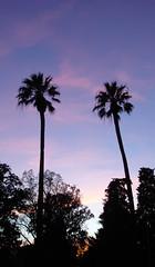 Palm Tree Sunset (jhhwild) Tags: sunset tree palm