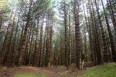 A man in the woods - Holkham, Norfolk (RoryO'Bryen) Tags: trees light man forest canon woods norfolk rory stunning holkham eos5d obryen roryobryen superbmasterpiece roarsthelion copyrightroryobryen