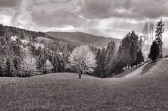 """old winter back to the savage hills ..."" (claude05) Tags: winter snow march thumbsup kandelblick challengeyouwinner 3waychallenge freiamtottoschwanden kuriseck"