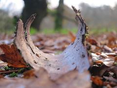 IMG_2080 (borneirana) Tags: cortez corteza naturaleza natur árbol hole otoño autumm