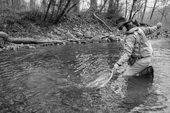 Net Connection (Between Two Banks) Tags: flyfishing westernnorthcarolina westernnorthcarolinaflyfishing trout rainbowtrout catchandrelease bambooflyrods customflyrods orvis simms fishpond blackandwhitephotography adventurephotography flyfishingphotography