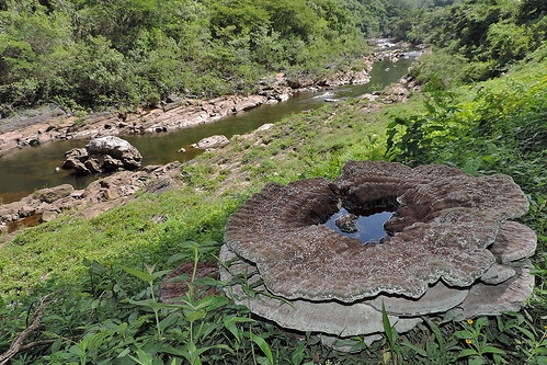 San Ignacio - Giant Unidentified Fungus