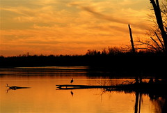 A Blue Heron Watching The Sunset (mightyquinninwky) Tags: trees sunset sky h