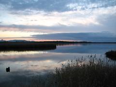 S'Ena Arrubia (Stranju) Tags: tramonto acqua riflesso oristano stagno airone canonpowershots3is giunchi stranju senaarrubia withcanonican sgiusta