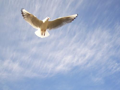 空きっ腹では青空を飛べないわ。帰る家もなく、いつまでも青空を飛び続けているのは悲しいわ。鳥だって、いつかは地面に降りる。せめて、眠っている間は、安全で安心できる家庭を与えて欲しい。カラスだって、おうちに帰るのよ。