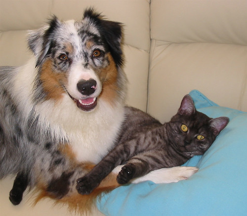 cute dog and kitten love cat pic