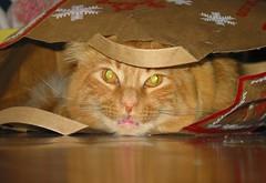 Christmas Spirit: Mr. Punky Kitten