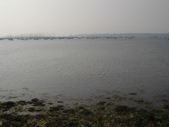 bmth[5-9-04] 032 (a_n_d_y_h_a_i_g_h) Tags: beach sandbanks pooleharbour