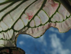 Palm Leaf and Blue Sky