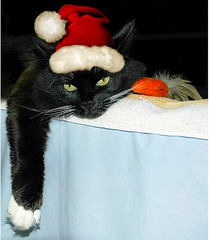 The Reluctant Christmas Cat, Ho Ho Hum.... (Shawn's Kitty (Busy Healing!)) Tags: christmas hat cat kitty merry christmaskitty santakitty hohohohat