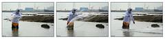 Fishing .. moments (Khalid AlHaqqan) Tags: sea fish man net beach nature water coast fishing kuwait khalid q8 fintas kuwson