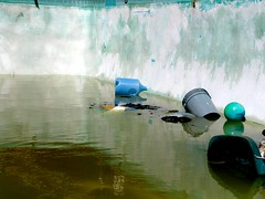 Pool (See El Photo) Tags: 15fav green water pool apt trash ball toy garbage apartment empty great floating loveit basura abandonded jug trashcan icky deepend greenish 1f dirtywater faved rubberball desperdicios abandondedapartment abandondedplace noonelivesherenow moreemptythanfull karatekidspool bluejug