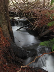 Under the tree you find the most amazing things (Mike Bingley) Tags: longexposure canada color colour art nature water colors waterfall colorful bc britishcolumbia atmosphere 2006 nanaimo vancouverisland northamerica i500 impressedbeauty interestingnessdecember21st207