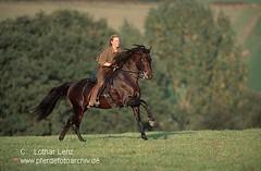 lus14052 (Lothar Lenz) Tags: horse caballo cheval deutschland cavalo pferd hest equus paard lusitano hst hestur bonitao konj hobu zirgs lotharlenz andreajnisch