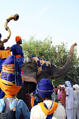 Elephants.. (Chitrakari) Tags: portrait india interestingness cool explore canon350d warrior turban sikh punjab hindu singh sanatan akali nihang batinda talwandi budhadal diamondclassphotographer