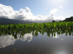 IMG_4321 (Bert Dickerson) Tags: vacation fun hawaii dolphin parrot helicopter mai tai catamaran kauai poipu napali