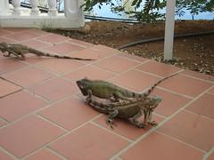 At the resort (Serge Melki) Tags: bonaire serge melki antilles
