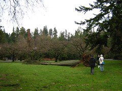 """stanley park mess • <a style=""""font-size:0.8em;"""" href=""""http://www.flickr.com/photos/70272381@N00/343519323/"""" target=""""_blank"""">View on Flickr</a>"""