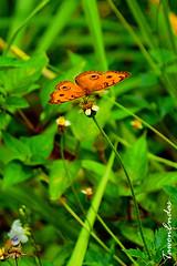 26-a (tawonendas) Tags: florafauna