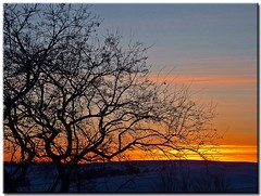Another January Sunset (4) (Roger Lynn) Tags: winter sunset snow tree moscow branches arboretum idaho universityofidaho palouse