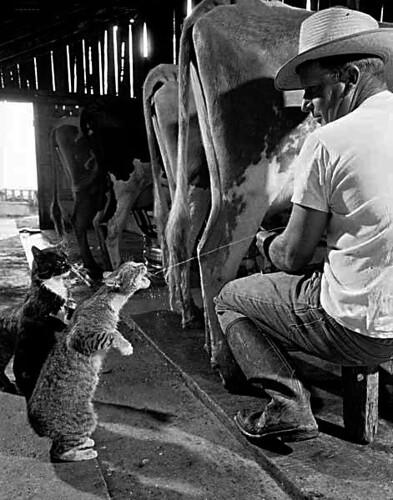 Animals, Digital Photography