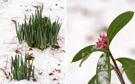 wintery flowers