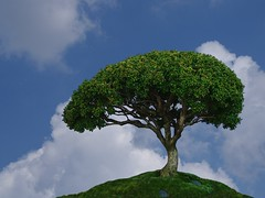 One Tree Hill (Creativity+ Timothy K Hamilton) Tags: blue tree green clouds one miniature 500v20f minolta hill tiny bonsai lone 5d konica hobbit hilltop bonzai maxxum 1500v60f 1000v40f 3000v120f timothykhamilton sav4del10