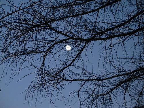La luna fra gli alberi