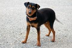 Wanna be my friend? (valerius25) Tags: sardegna dog pet cane eyes sardinia perro occhi arbus montevecchio guspini valerius25 valeriocaddeu