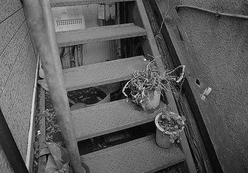 階段に植木