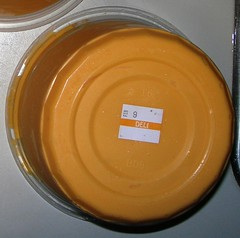 QFC Nacho Cheese Trio Feb 9 Expiration