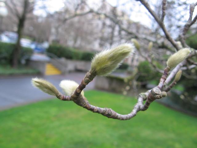 bud_tree