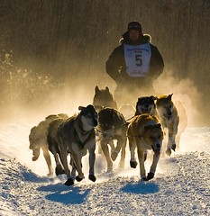 Mush! (eyebex) Tags: winter cold dogs sports race breath fast delete8 canine delete steam yukon rush save10 musher mushing sled booties whitehorse 108 sleddogs yukonquest canines savedbythedeletemeuncensoredgroup p1f1 impressedbeauty superbmasterpiece ukazmiohnivoureku ultraselected arcticantarctic